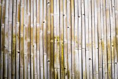 Dry bamboo texturedry bamboo texture exactly verticall exactly vertically straight wall floor light. Eco natural background concep stock photo
