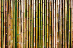 Dry bamboo tree fence wall background Royalty Free Stock Images