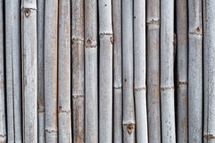 Dry bamboo wall Royalty Free Stock Image