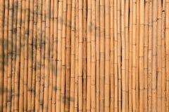 Dry bamboo wall Stock Photos