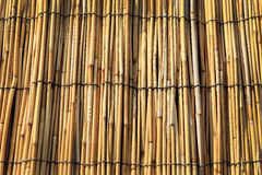 Dry bamboo wall texture background Stock Images