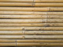 Dry bamboo wall texture Stock Image