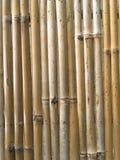 Dry bamboo wall texture Stock Photo