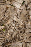 Dry banana leaf. Background and texture of dry banana leaf with brown color Stock Photos