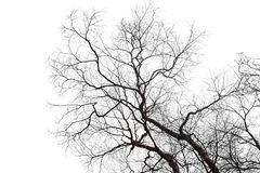 Free Dry Bare Branches Isolated On White Background Stock Image - 137370761