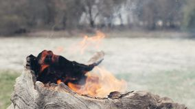 Dry bark of old tree burning in fire in forest close up. Burning trunk old tree. Dry bark of old tree burning in fire in forest close up. Dangerous kindling stock video footage