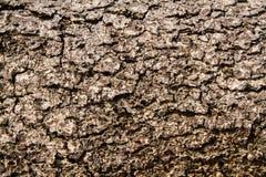 Dry bark texture Royalty Free Stock Photo