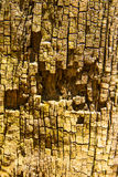 Dry bark tree Stock Photography