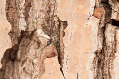 Dry bark Stock Photography
