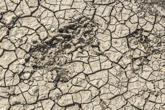 Dry Barren Cracked Soil With Animal Tracks Stock Photos