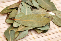 Dry bay laurel leaves Royalty Free Stock Photos