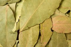 Dry bay laurel leaves. Background royalty free stock images