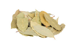 Dry bay laurel leaves isolated Royalty Free Stock Images