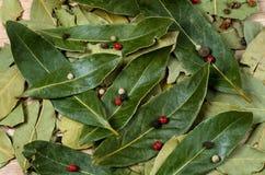 Dry bay laurel leaves Stock Photo