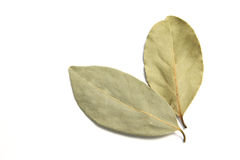 Dry bay leaves Royalty Free Stock Photos