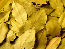 Dry bay leaves. 