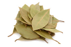 Dry bay leaves. Isolated on a white background stock image