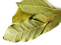 Dry bay leaves on white. Macro bay leaves spice for cooking isolated on a white background Stock Images