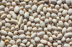 Dry bean seeds texture Royalty Free Stock Photos