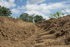 Dry bean soil ridge stock photos