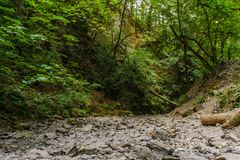 Dry bed of a mountain stream in the forest on Vancouver Island Canada. Royalty Free Stock Photo