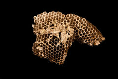 Dry Beehive Royalty Free Stock Images