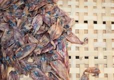 Dry behandla som ett barn tioarmade bläckfisken Royaltyfria Foton