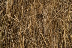 Dry bevelled hay close-up. The concept of winter food for farm animals. Cows and sheep royalty free stock image
