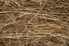 Dry bevelled hay close-up. The concept of winter food for farm animals. Cows and sheep stock photos