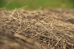 Dry bevelled hay close-up. The concept of winter food for farm animals. Cows and sheep royalty free stock images