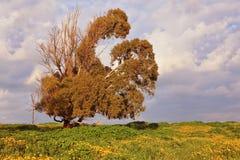 Dry bizarre huge tree Royalty Free Stock Photo
