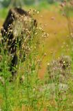 Dry blade of grass in a lush field stock photo