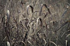 Dry blade of grass in winter autumn field Stock Photo