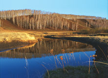 Birches reflected in the blue surface of the water 2 Royalty Free Stock Images