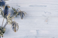 Dry blue flower on light soft blue wooden board. Decorative spring background with copy space, top view. Stock Image