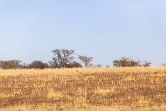 Dry Blue Landscape Royalty Free Stock Photo