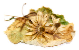 Dry blurred leaves with artichoke flowers Stock Photography
