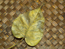 Dry Bo leaf isolated on wood weave background Royalty Free Stock Images