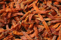 DRY BOLIVIAN CHILI. A typical red hot chilli pepper from Bolivia Royalty Free Stock Photos