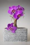 Dry bonsai Stock Images