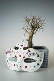 Dry bonsai tree Stock Photography