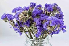 Dry bouquet from abstract small blue flowers Stock Photo