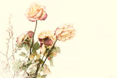 Dry bouquet of roses. Fading rose. Stock Image