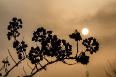 Dry branch on the background of the sunset Stock Images