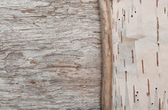 Dry branch on the birch bark and old wood Royalty Free Stock Image