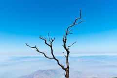 Dry branch Royalty Free Stock Images
