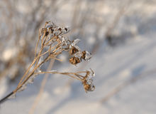 Dry branch bush covered with ice close -up Stock Photos