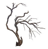 Dry branch Stock Photography