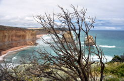 Dry branch on the coast along the Great Ocean Road stock photos