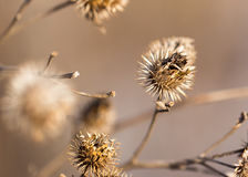 Dry branch of flowers. close-up Stock Photography